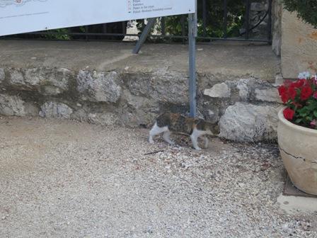 イスラエル旅行_写真6MG_8505